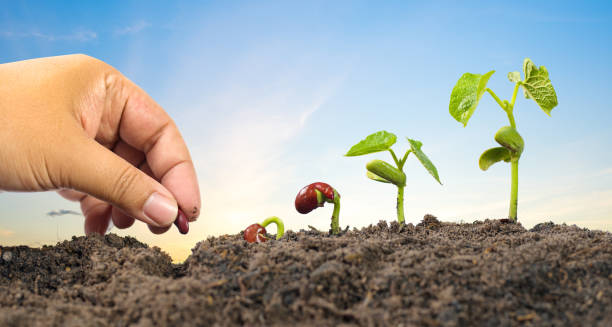 farmer hand seed planting with seed germination sequence - seed stock photos and pictures