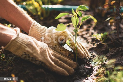 farmer hands take care and protect young little sprout plant in the soil ground