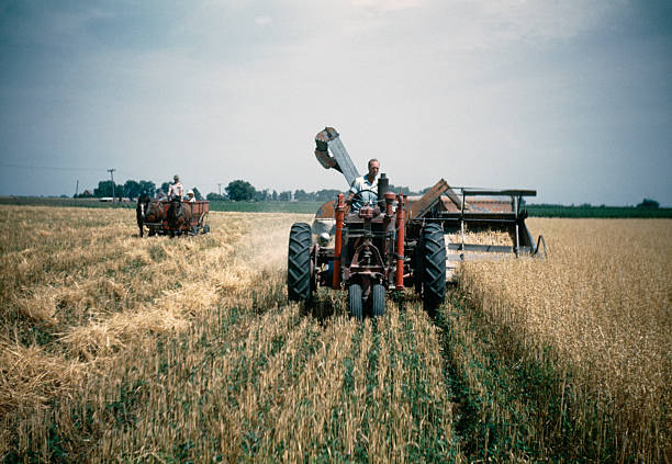 farmer harvesting oats in field 1948, retro  oat crop stock pictures, royalty-free photos & images