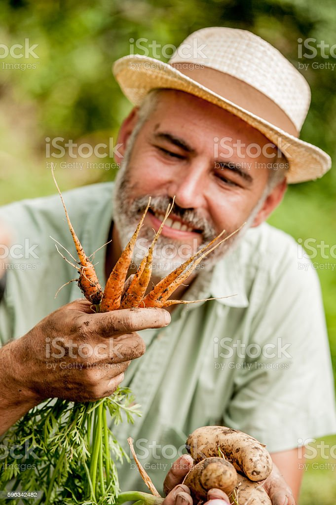 Farmer Harvesting Vegetable Lizenzfreies stock-foto