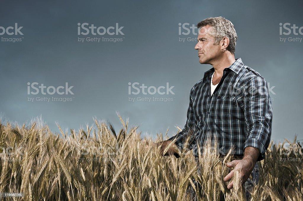農家が彼の小麦のフィールド ストックフォト