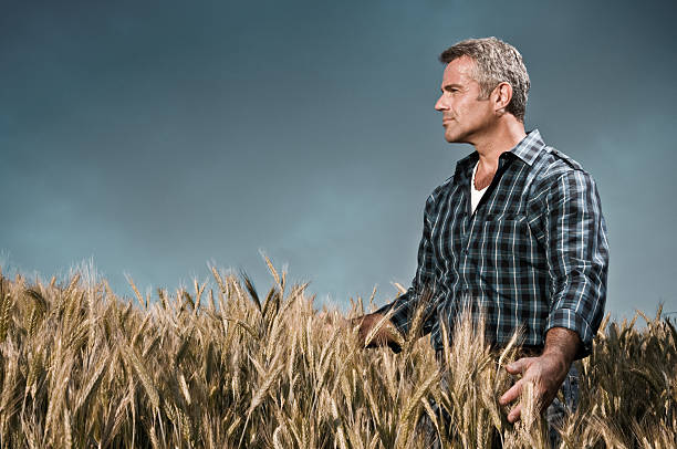 Farmer has care of his wheat field  only mature men stock pictures, royalty-free photos & images