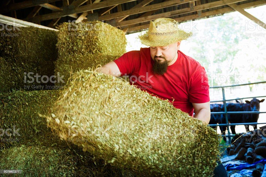 Farmer hauling hay stock photo