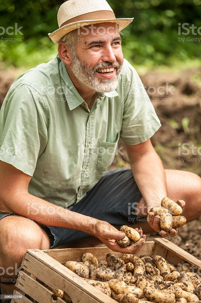 Farmer Having Fun Picking Up Potatoe royalty-free stock photo