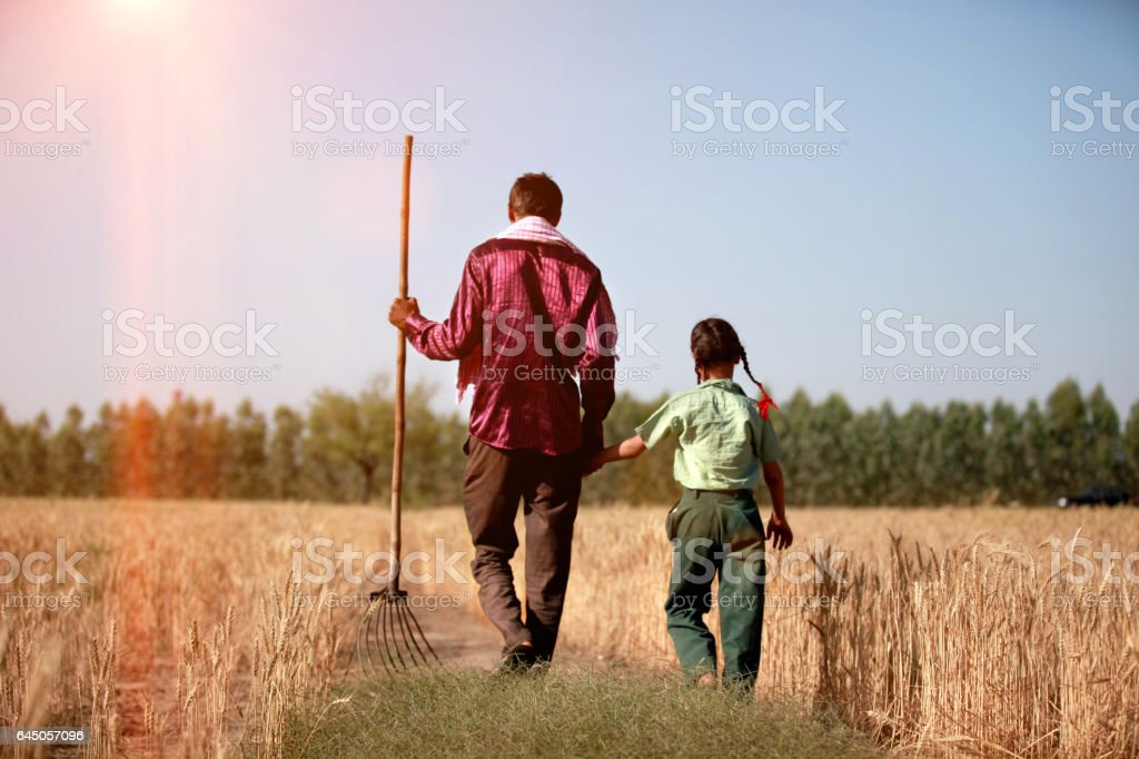 Farmer & his daughter walking in the wheat field stock photo