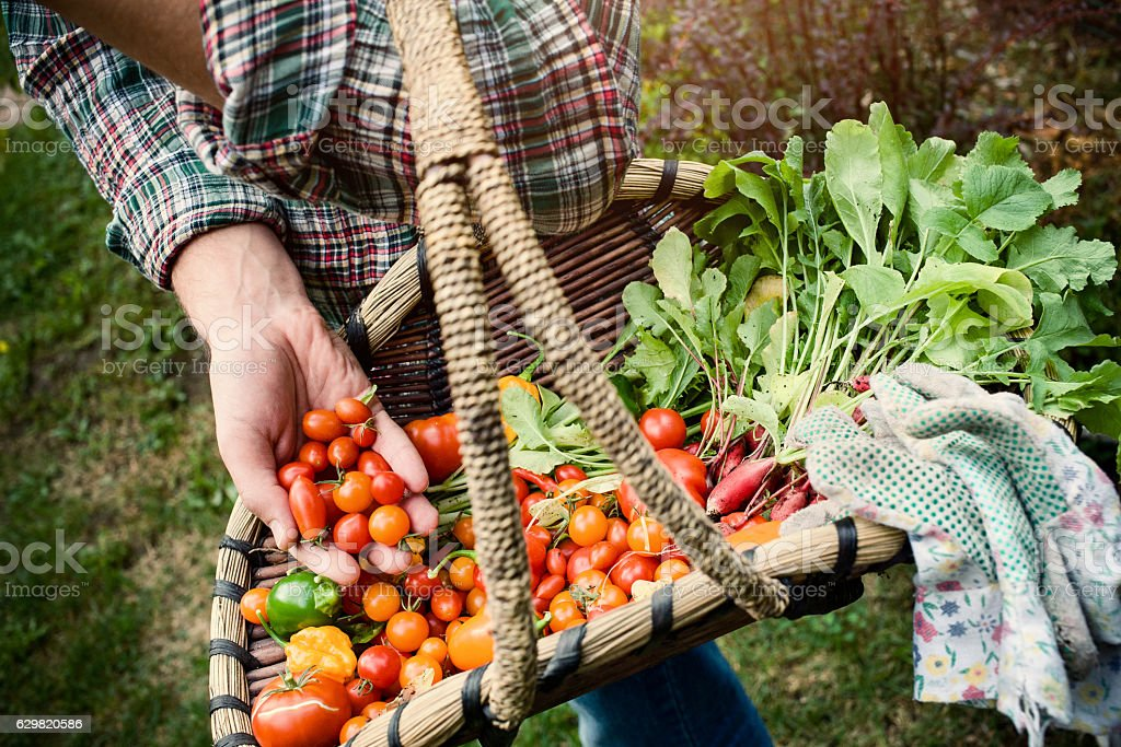 Farmer holding a basket stock photo