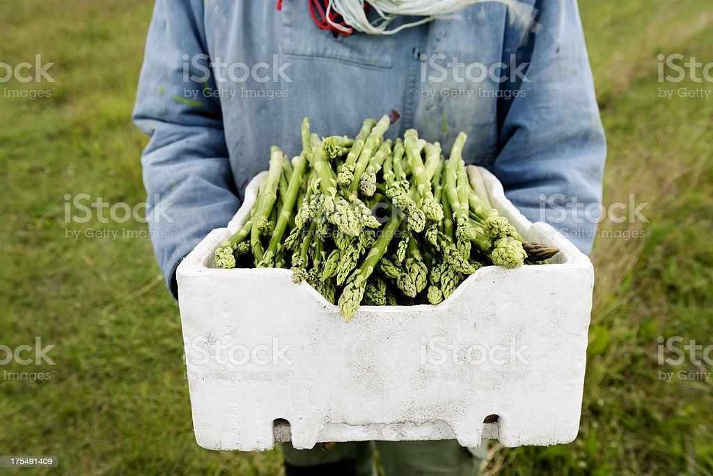 Farmer sosteniendo una caja de probar orgánicos espárragos - foto de stock