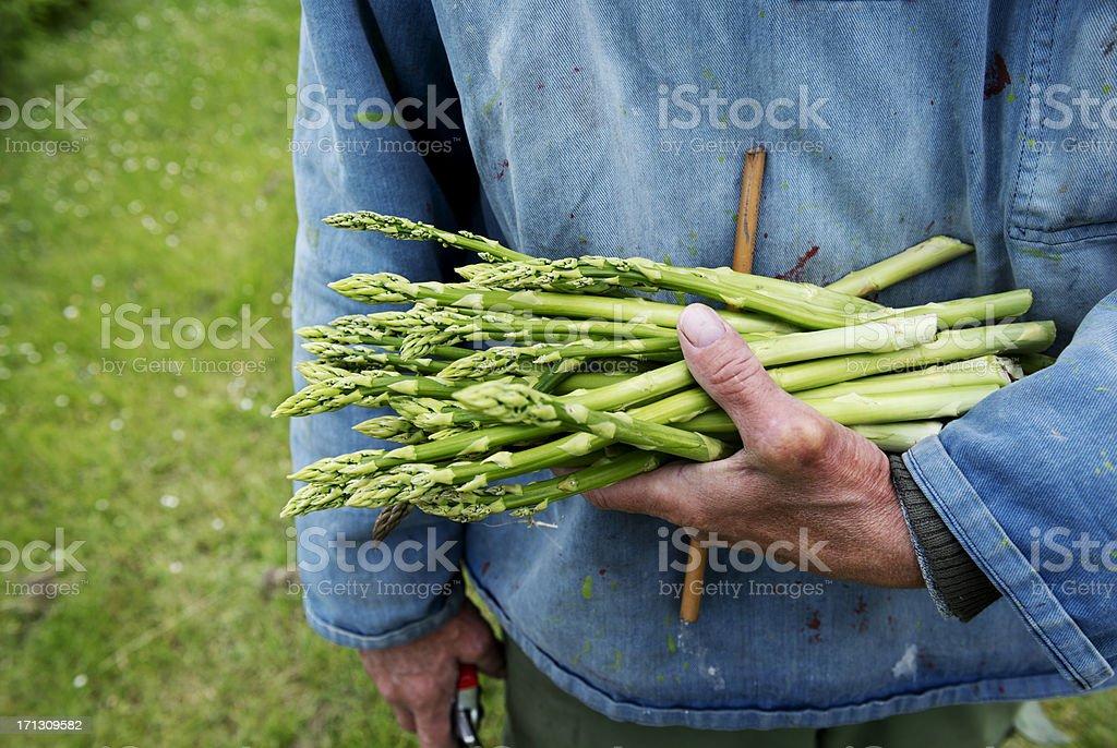 Farmer sosteniendo un ramo de espárragos recién probar orgánicos - foto de stock
