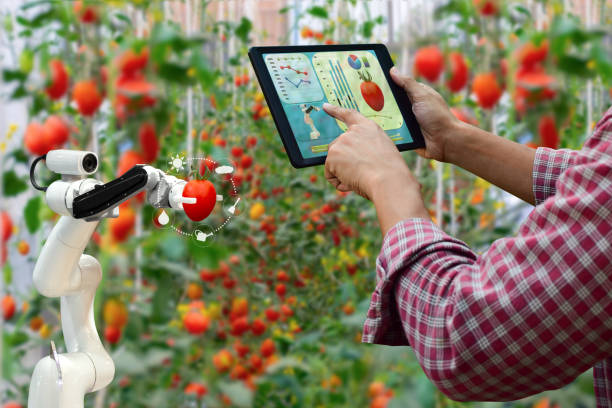 Farmer holding a tablet smart arm robot harvest work agricultural machinery technology stock photo