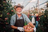 Senior man holding a basket full of apples