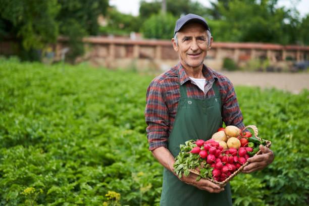 Landwirt Holding Korb mit Gemüse – Foto
