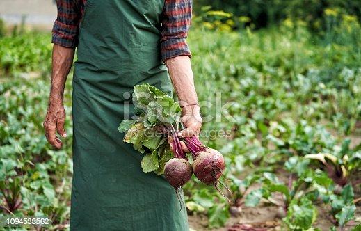 Farmer holding beet