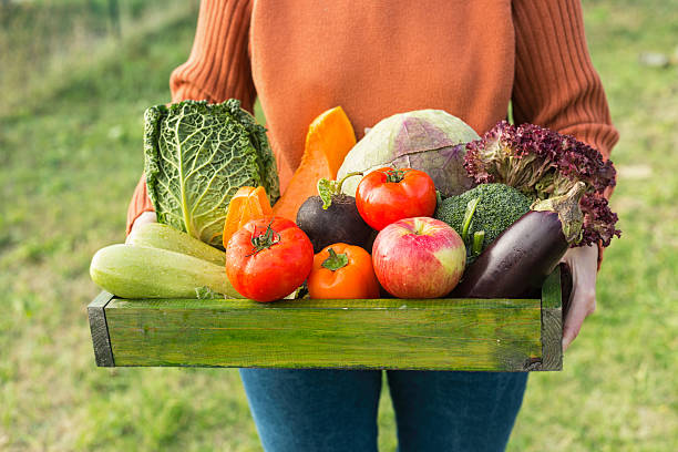 farmer holding box with fresh organic vegetables - organic stock pictures, royalty-free photos & images