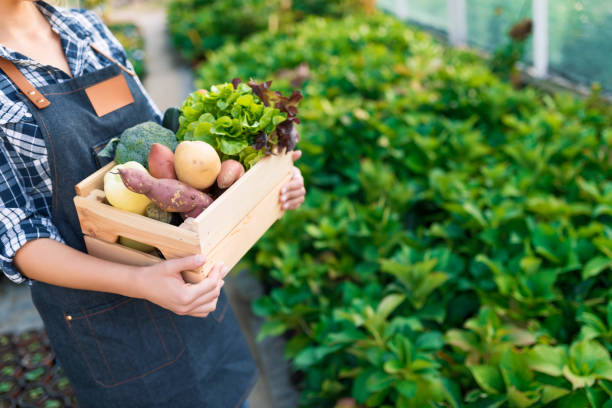 farmer holding box with vegetables - farmers market stock pictures, royalty-free photos & images