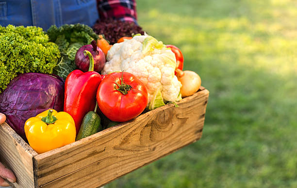 farmer holding box with vegetables stock photo