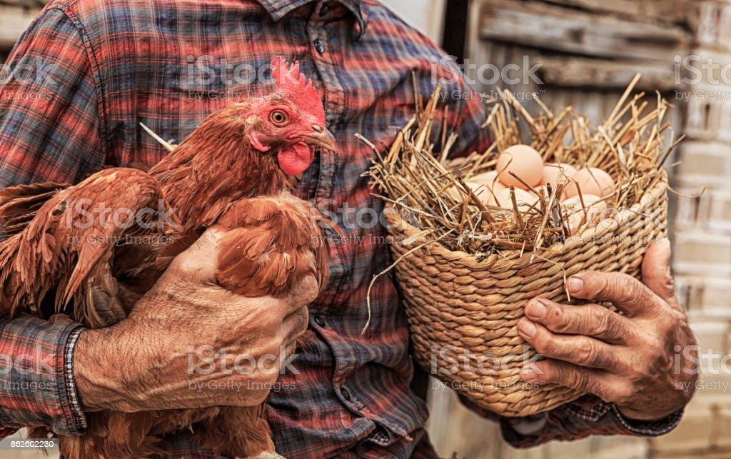 Landwirt mit Huhn und Korb mit Eiern – Foto