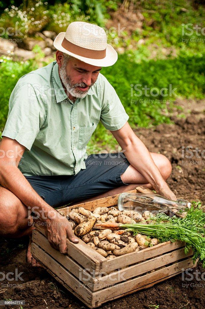 Farmer Holding Crate Full of Vegetable Lizenzfreies stock-foto