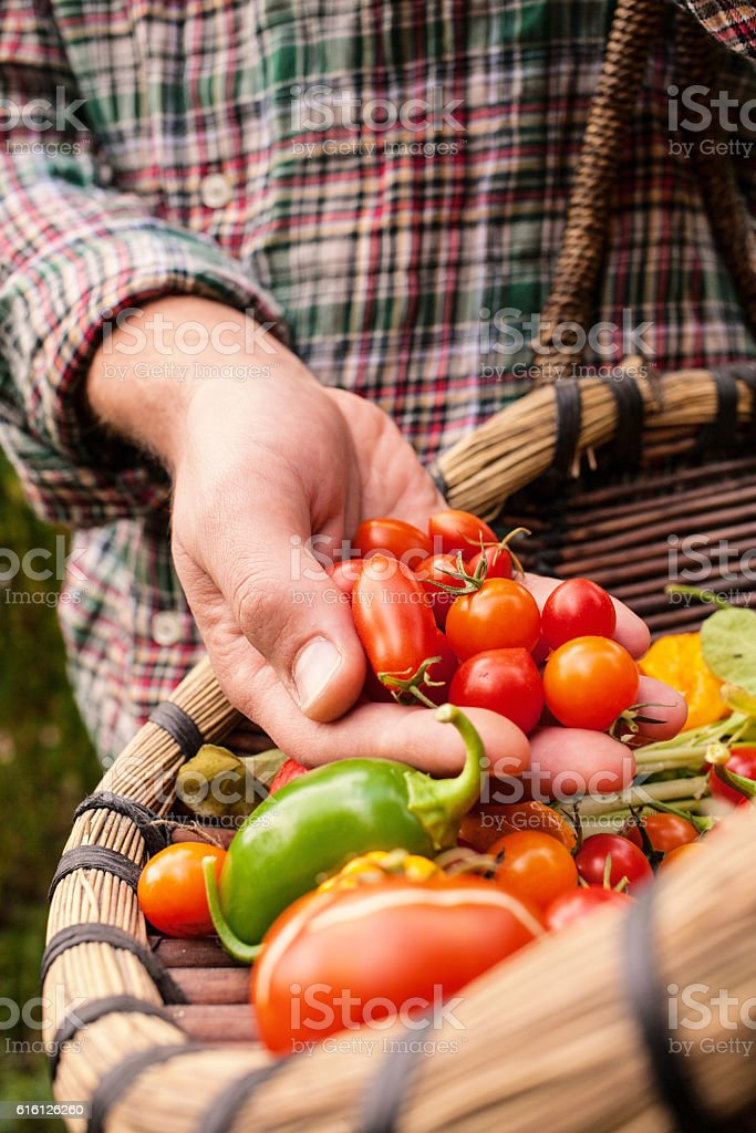 Farmer holding fresh picked vegetables stock photo