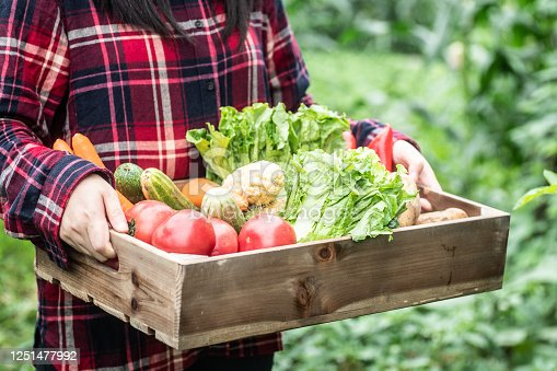 Farmer holding wooden crate filled with fresh vegetables