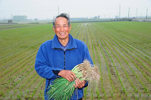 Farmer Holding Knoblauch Schnittlauch – Foto