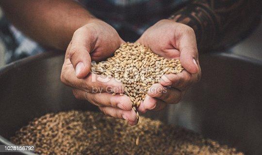 Farmer holding grains