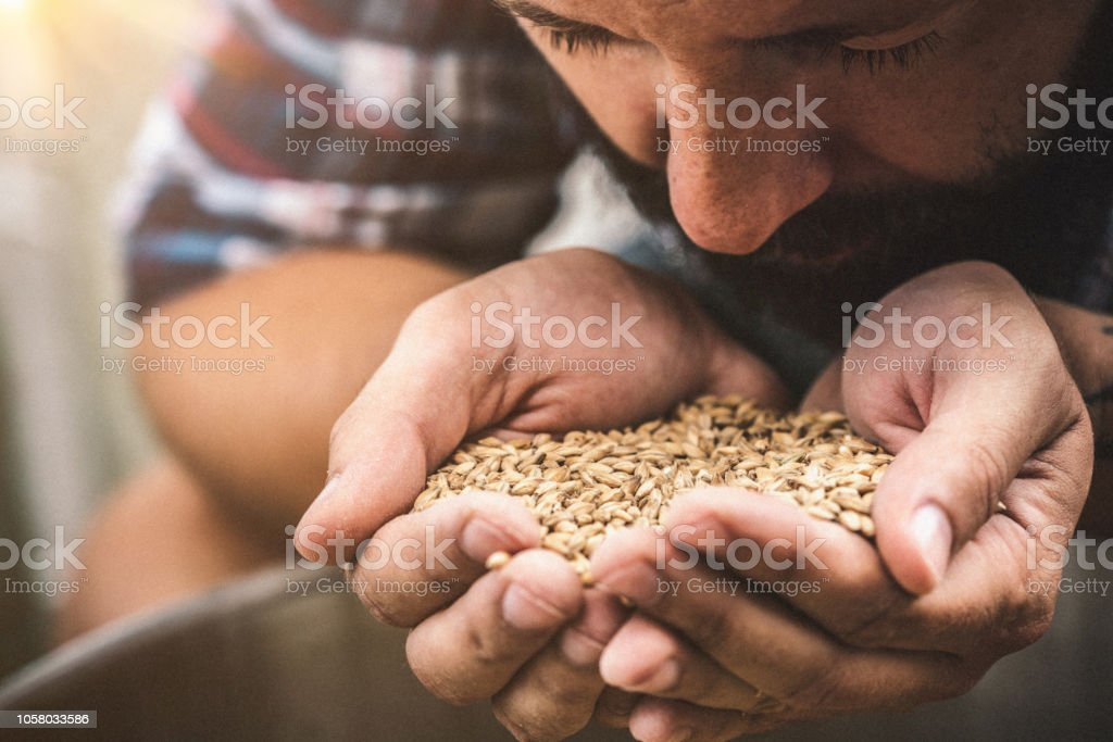 Farmer holding grains stock photo