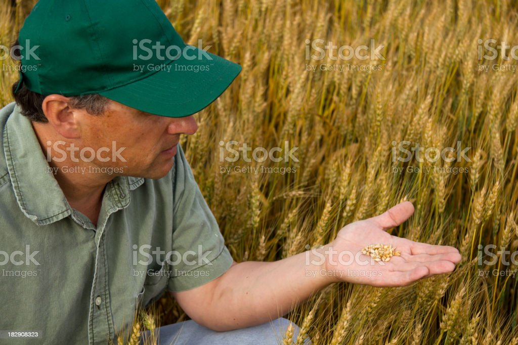 Farmer Holding Seeds royalty-free stock photo