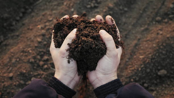 손 클로즈업에 흙을 들고 있는 농부 - 비료 뉴스 사진 이미지
