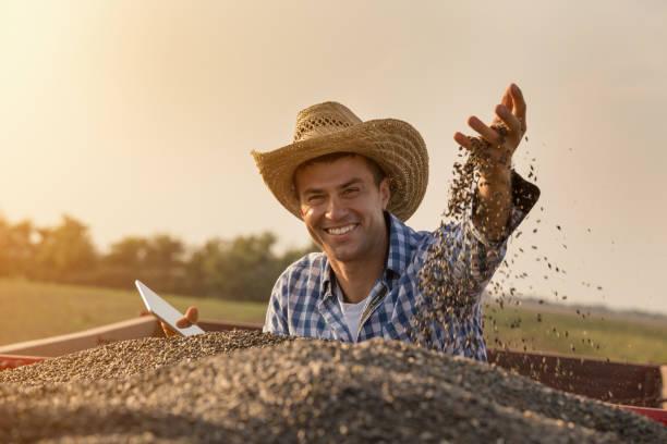 bauer hält sonnenblumenkerne in der hand - bauernberuf stock-fotos und bilder