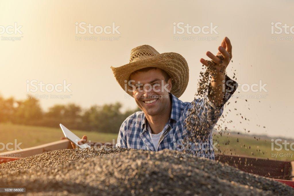 Farmer holding sunflower seeds in hand stock photo