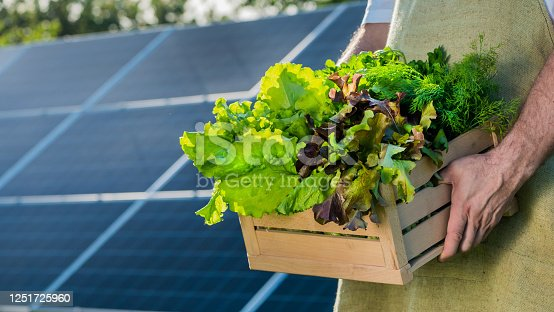 Farmer holds a box of salots and greenery against the background of solar power plant panels