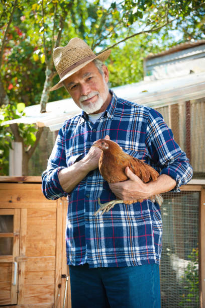 farmer holds chicken in his arms in front of hen house - allevatore foto e immagini stock
