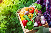 Farmer holds in hands wooden box with autumn crop of organic vegetables against backyard background with data space.