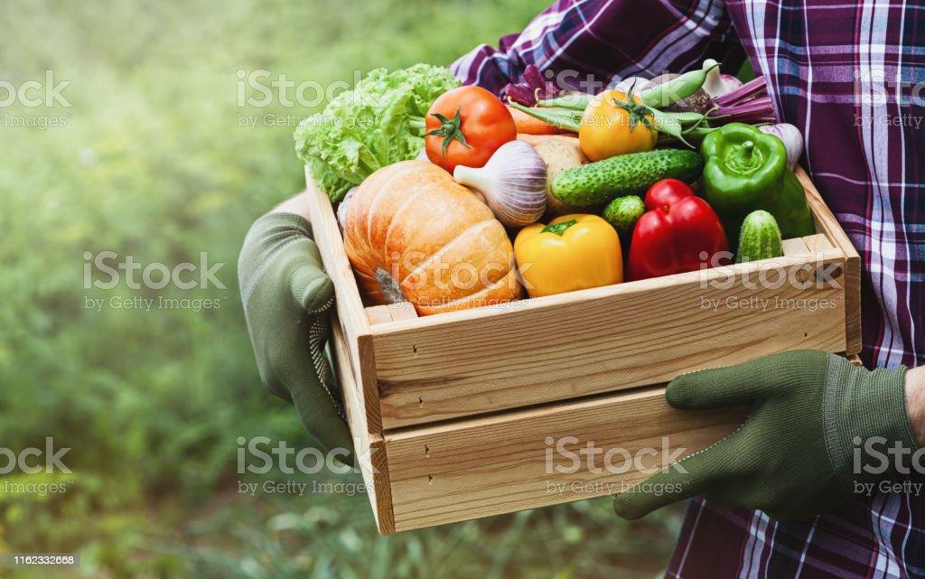 농부는 정원에서 야채 농산물과 손에 나무 상자를 보유하고 있습니다. 신선하고 유기농 식품. - 로열티 프리 가을 스톡 사진