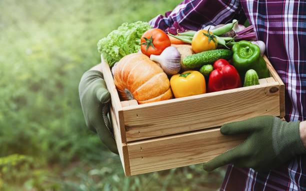 rolnik trzyma w rękach drewniane pudełko z warzywami w ogrodzie. świeże i ekologiczne produkty spożywcze. - zbierać plony zdjęcia i obrazy z banku zdjęć
