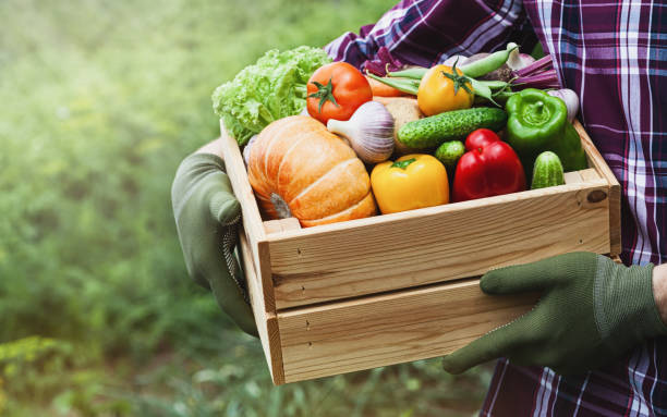 Farmer holds in hands wooden box with vegetables produce in garden. Fresh and organic food. Farmer holds in hands wooden box with vegetables produce on the background of the garden. Fresh and organic food. fruit stock pictures, royalty-free photos & images