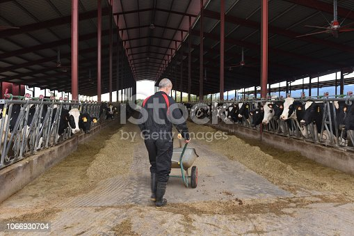 istock farmer in a cow farm 1066930704