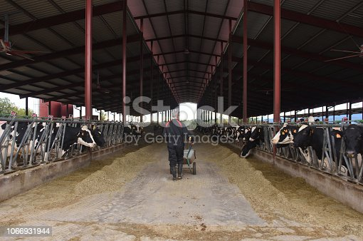 istock farmer in a cow farm 1066931944