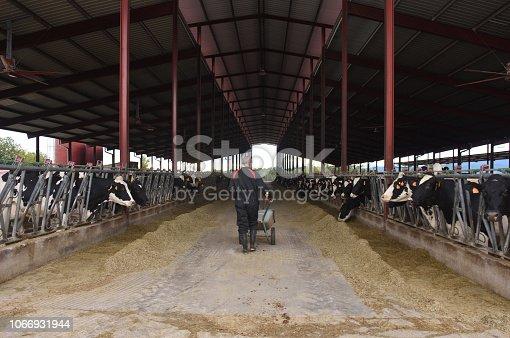 istock farmer in a cow farm 1066931944