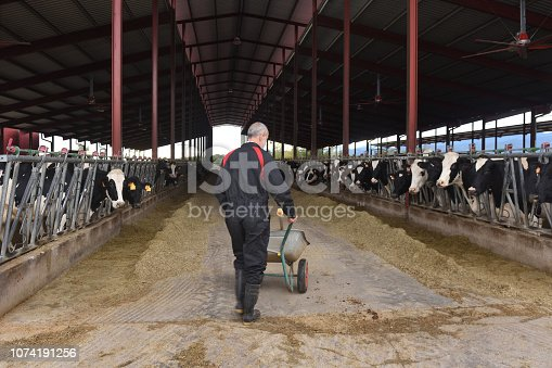 istock Farmer in a cow farm 1074191256