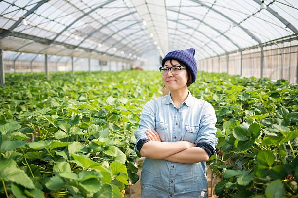 landwirt in einem gewächshaus - urbaner garten stock-fotos und bilder