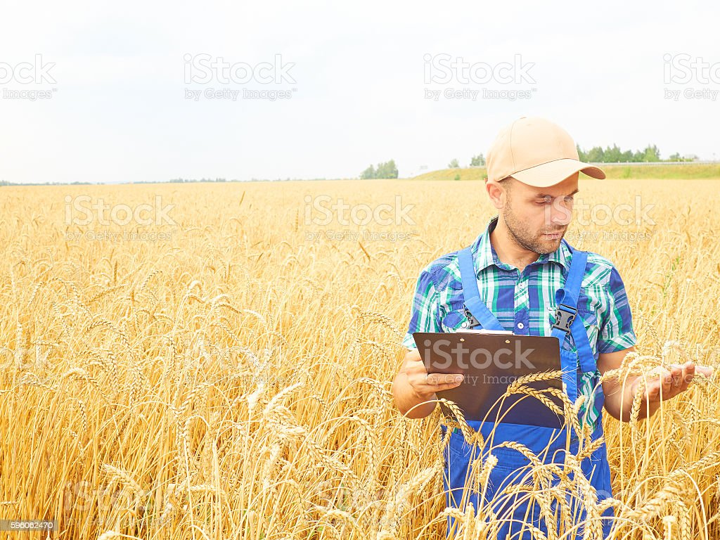 Farmer in a plaid shirt controlled his field royalty-free stock photo