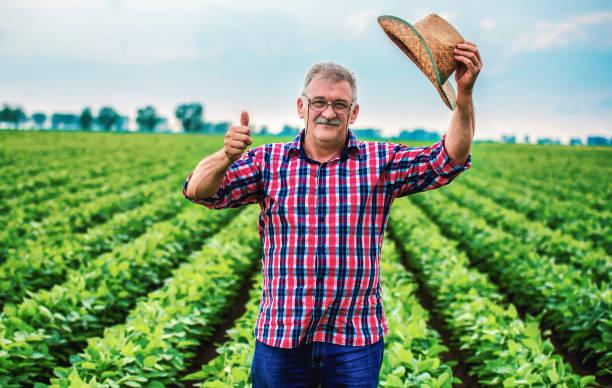Landwirt in einem Sojabohnenfeld. Landwirtschaftliches Konzept – Foto
