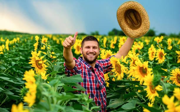Landwirt in einem Sonnenblumenfeld. Landwirtschaftliches Konzept – Foto
