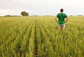istock Farmer in a Wheat Field 184300524