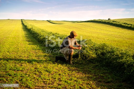 A farmer checking an alfalfa crop in late afternoon light.  A tractor is windrowing in far in the background