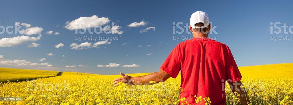 Farmer in Canola stock photo