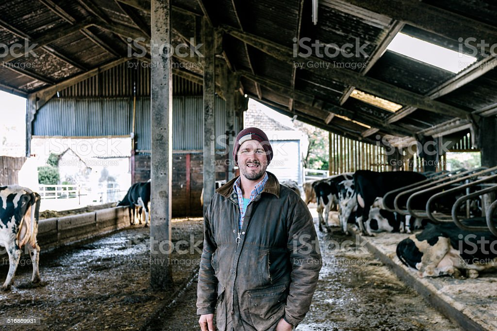 Farmer in cattle shed stock photo