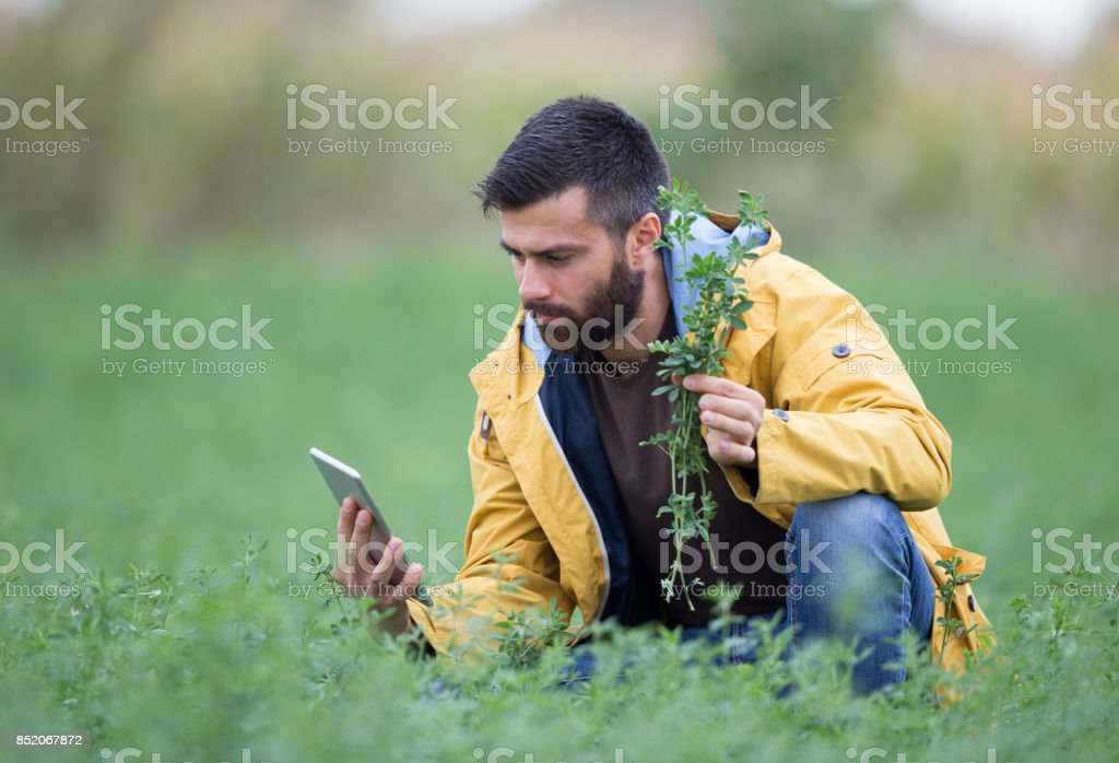 Farmer in clover field stock photo