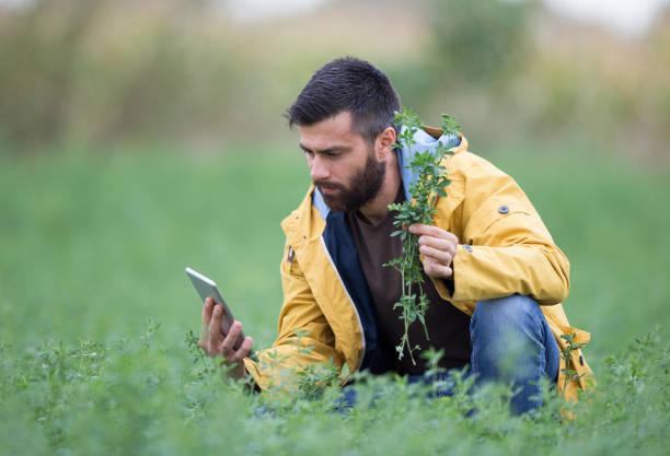farmer in clover field - erba medica foto e immagini stock